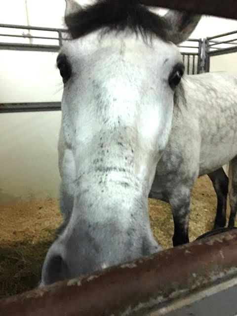 Up Close and Personal With Horse