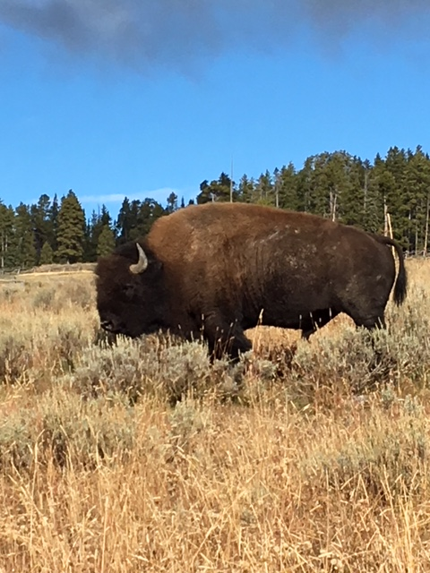 Then Sun And A Bison Sighting