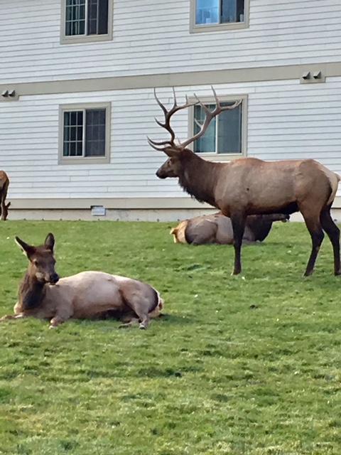 More Elk Sightings!