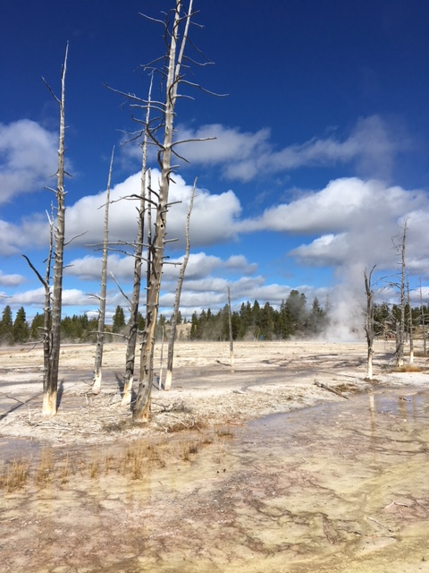 More From Yellowstone