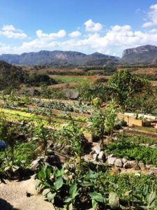 Organic Farm in Vinales Valley