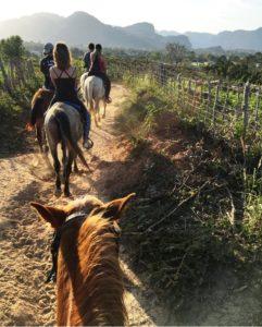 Horseback Riding Through Tobacco Plantations